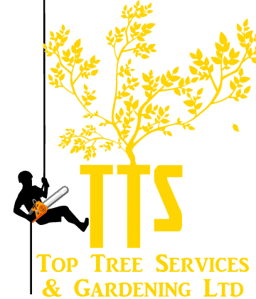 TTS new logo
